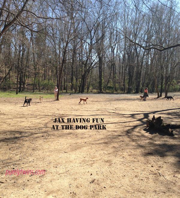 jax-dogpark