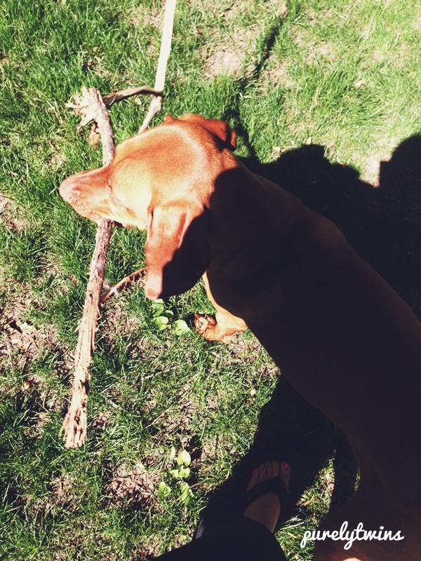 jax stick