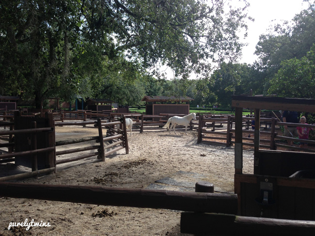 disney horses