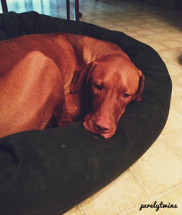 jax sleeping in bed