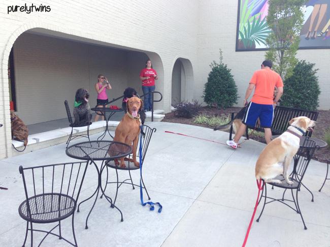 jax dog training