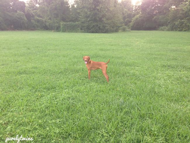 jax in park