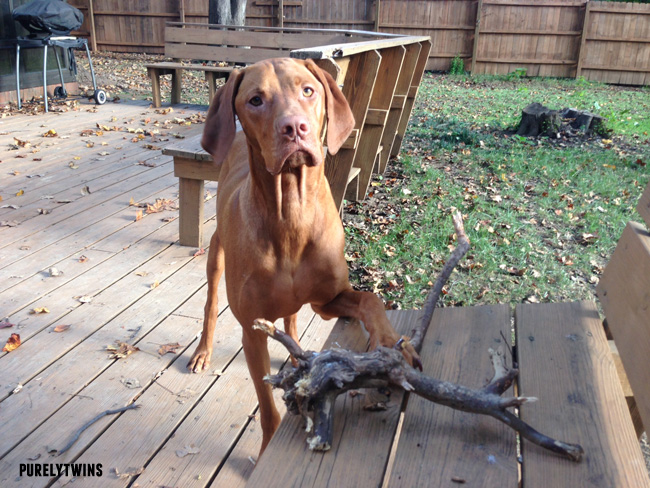 jax and big stick