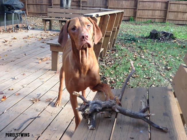 jax and big stick