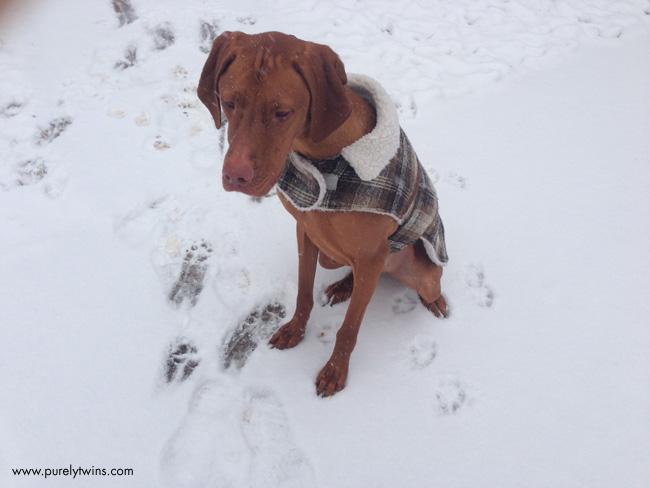 jax in snow