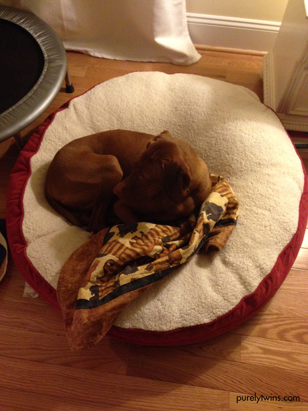 jax in his bed