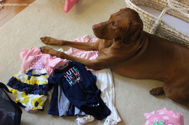 jax helping with folding baby clothes