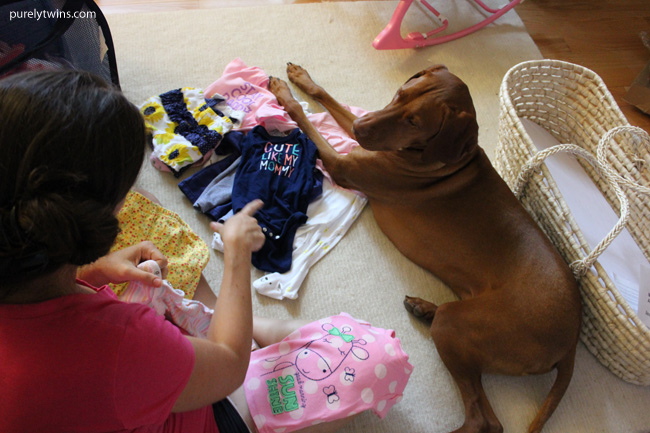 vizsla helping fold baby clothes purelytwins