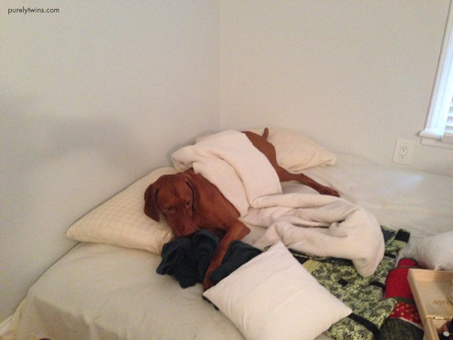 jax playing bed
