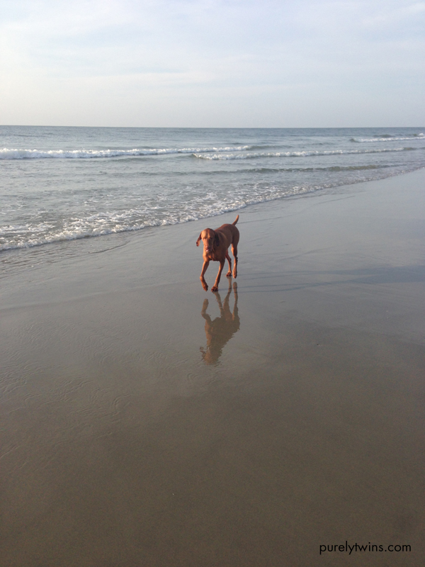jax running on beach in morning