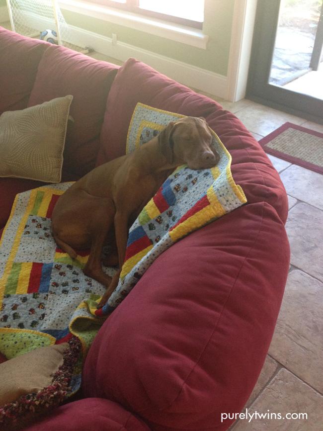jax sleeping on couch