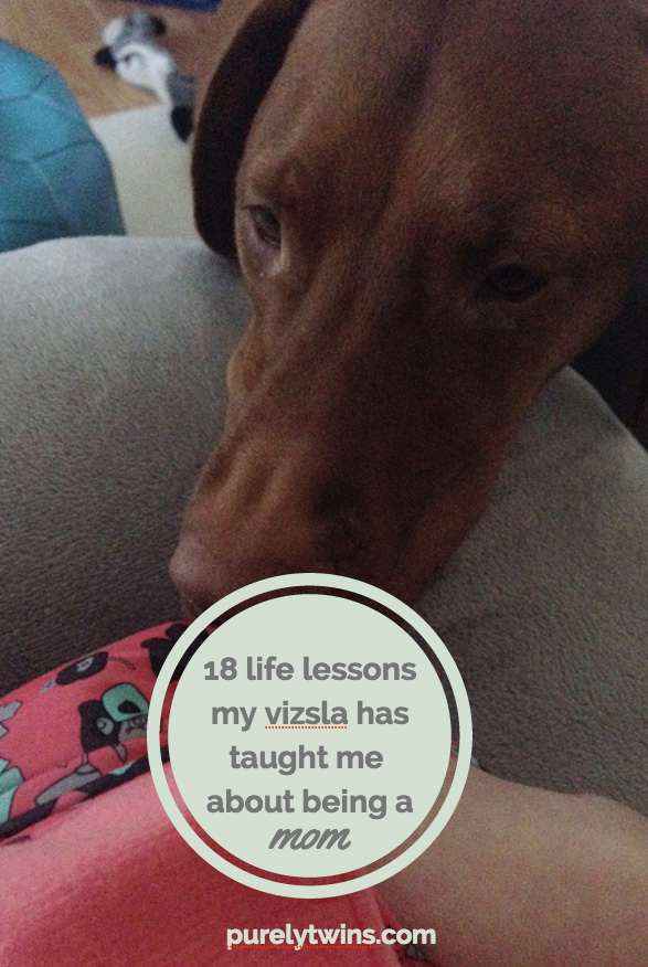 18-life-lessons-my-vizsla-has-taught-me-about-being-a-mom