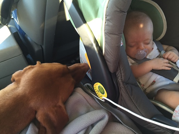 sleeping baby and dog in car ride
