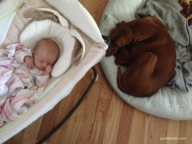 sleeping-baby-and-vizsla