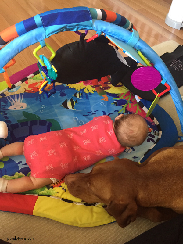 tummy-time-vizsla-next-to-baby
