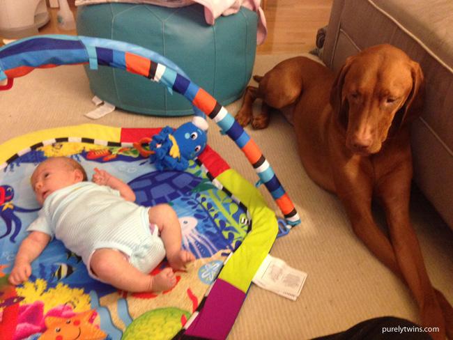 vizlsa-lying-next-to-newborn-baby