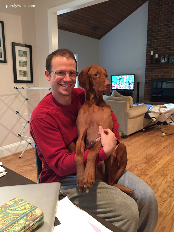 vizsla-sitting-in-owners-lap-in-chair