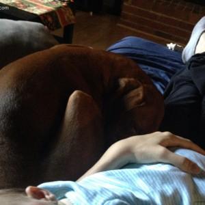 vizsla-sleeping-next-to-baby-nap-time