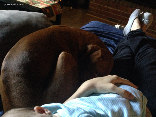 vizsla-sleeping-next-to-baby-nap-time