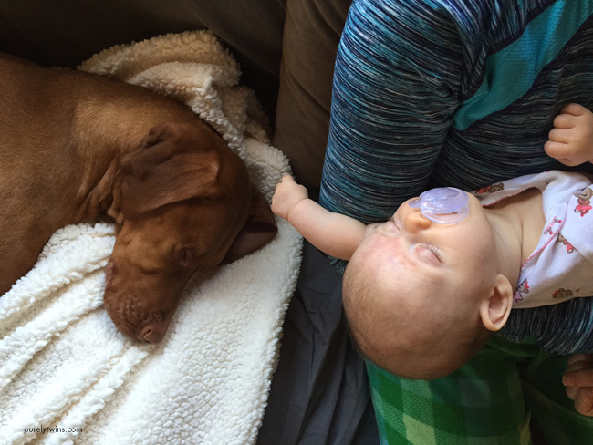 sleeping-baby-and-vizsla-passed-out