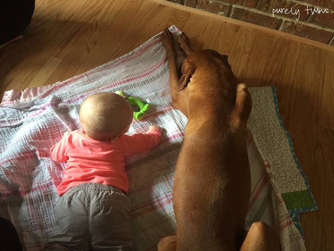 vizsla-dog-and-4-month-old-baby