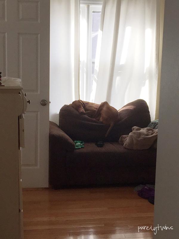 jax on sofa