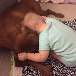 vizsla-dog-and-baby-hugging
