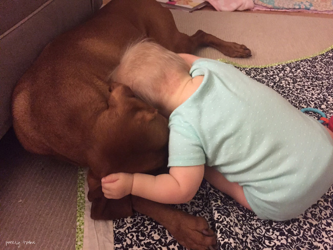 vizsla-dog-and-baby-hugging