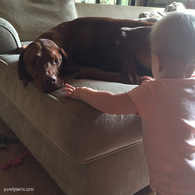 baby-and-vizsla-dog