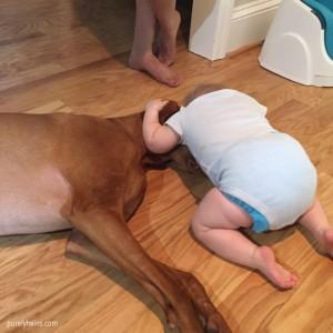 baby-hugging-vizsla