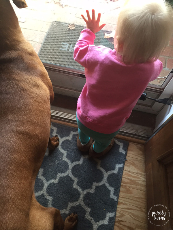 vizsla-and-15-month-old