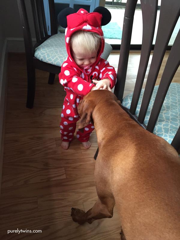 Vizsla and baby girl playing