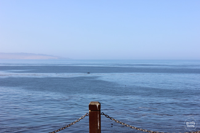 Seeing whales off the California coast. Pismo Beach.