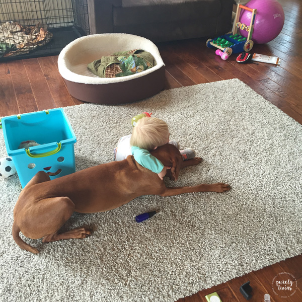 Vizsla and toddler hugging