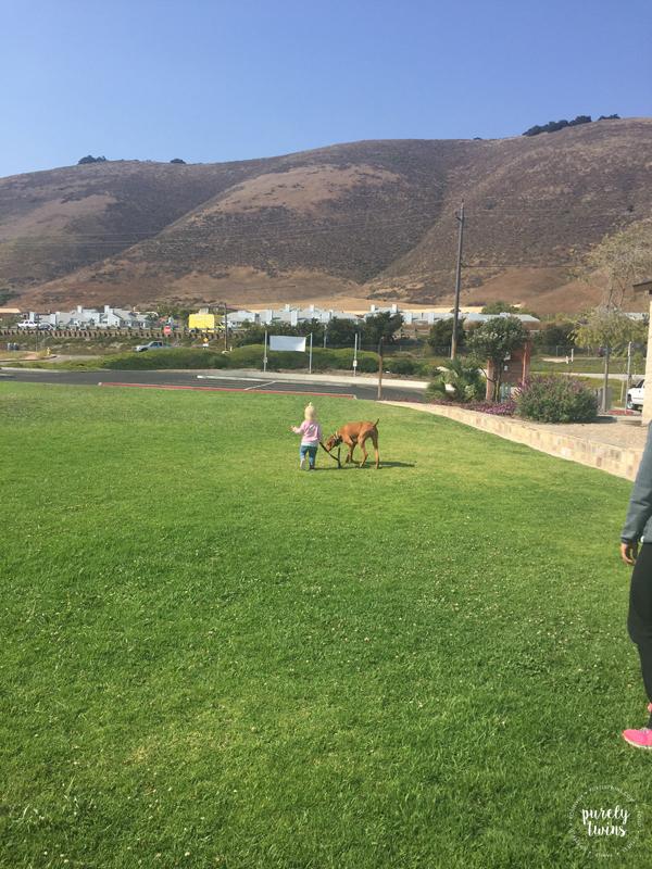 Toddler walking her 4 year old vizsla