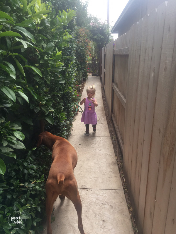 2 year old toddler girl playing in backyard in California with her Vizsla