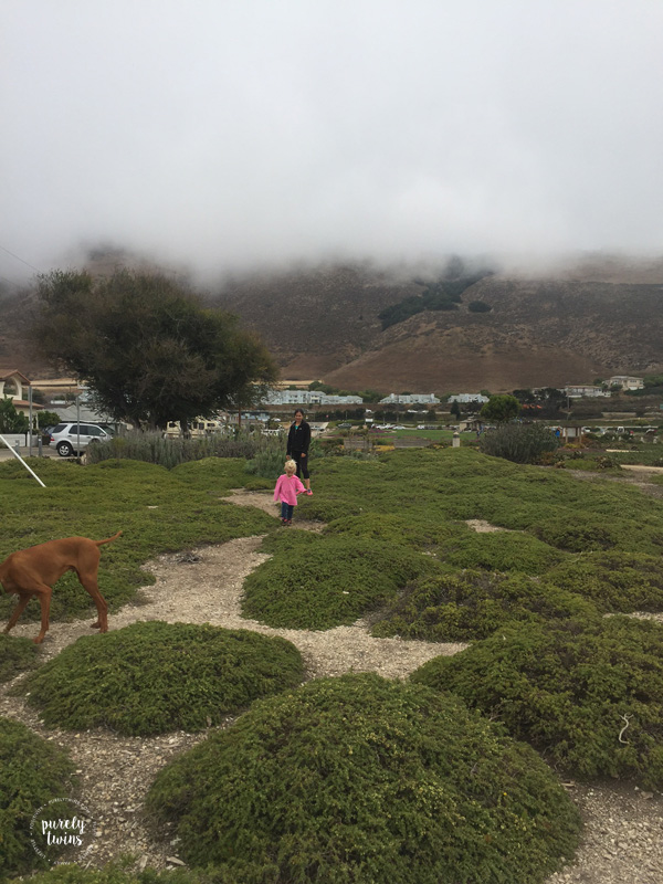 Crazy California fog at Dino Park in Pismo Beach