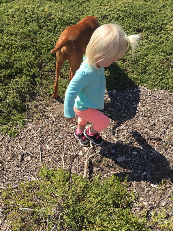 Toddler running around with vizsla