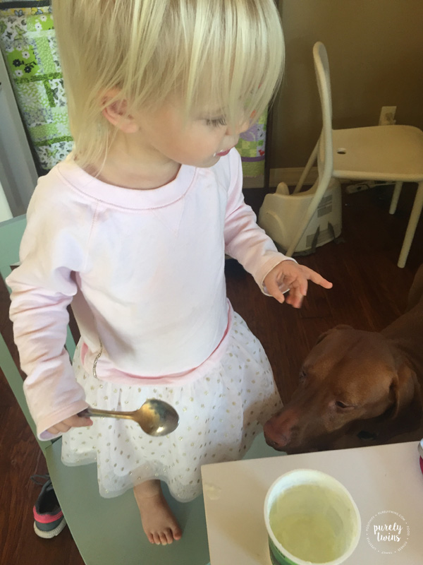 Eating yogurt with vizsla not to far for any droppings.