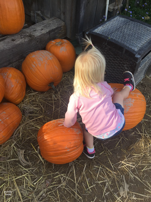 Toddler playing with pumpkins