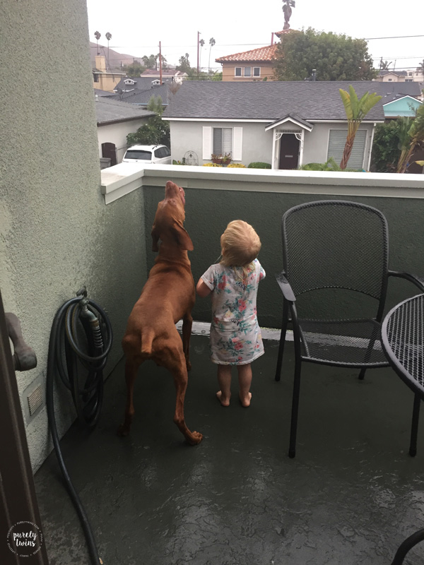 Rain in pismo beach and vizlsa dog and toddler playing in the rain