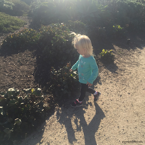 2 year old girl dino park CA