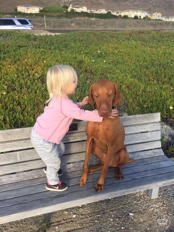 toddler-giving-vizsla-dog-a-hug