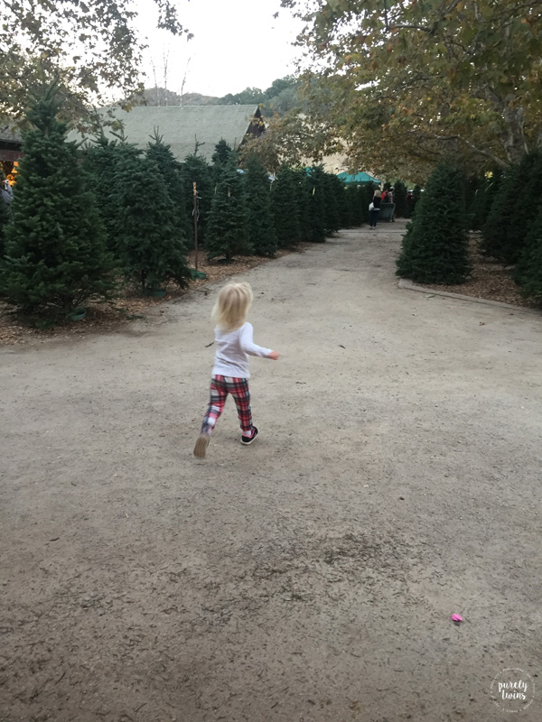 Toddler running around Christmas tress in Availa