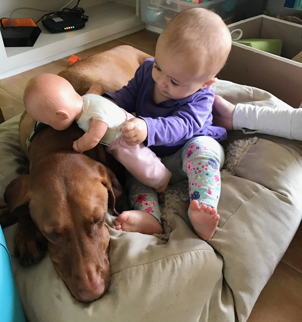 baby and vizsla dog
