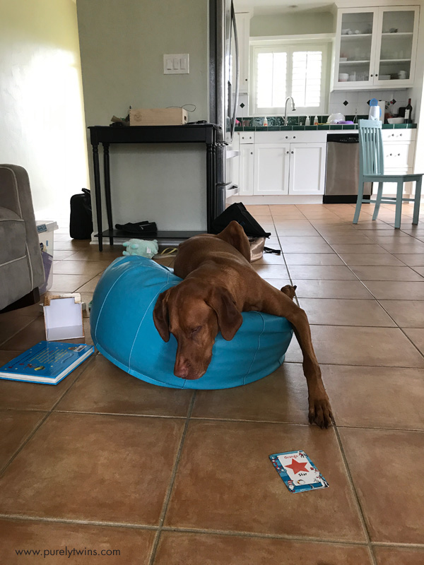 Silly vizsla sitting on bean bag