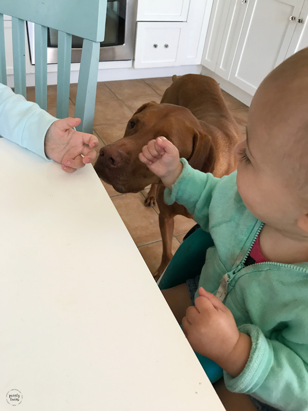 vizsla and little kids